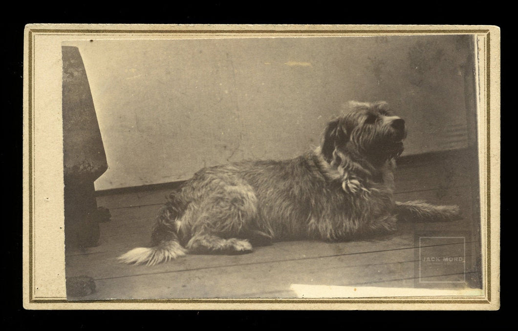 Great 1860s CDV Photo - Terrier Dog Posed Alone - Window Light on Studio Floor - Bethel Vermont