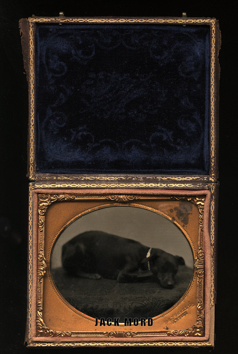 Sleeping Dog on Table! Antique Tintype Photo Fall River MA Photographer Dunshee