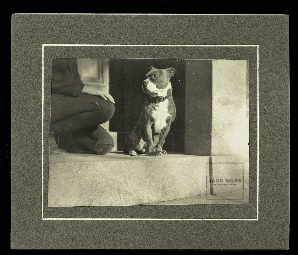 Unusual Early 1900s Cabinet Photo Headless Boy & Pit Bull Dog