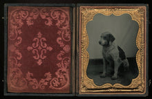 Load image into Gallery viewer, 1/4 Plate Ambrotype Photo of a Spotted Dog - Antique Image, Late 1850s!
