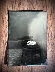 Antique 1870s SLEEPING CAT Tintype