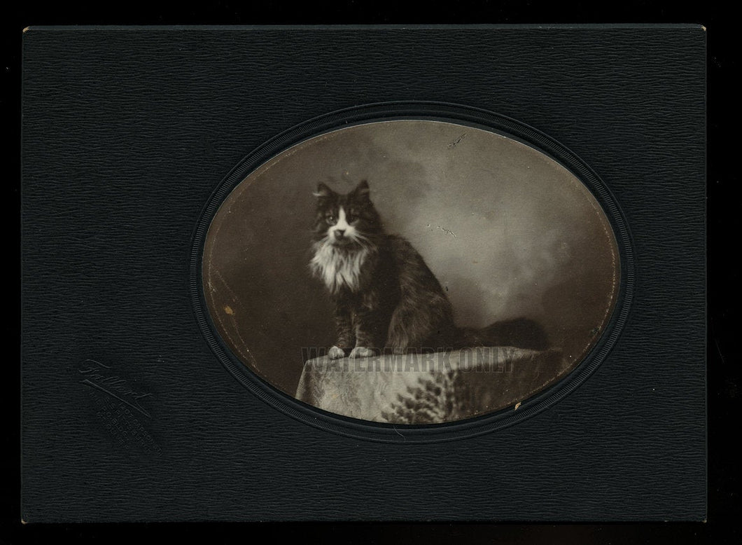 Antique CAT Photo