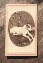 Load image into Gallery viewer, Antique 1880s CDV Photo, Little Dog on Chair
