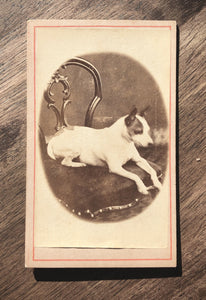 Antique 1880s CDV Photo, Little Dog on Chair