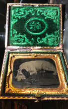 Load image into Gallery viewer, sleeping spaniel dog - antique tintype photo in case, 1860s