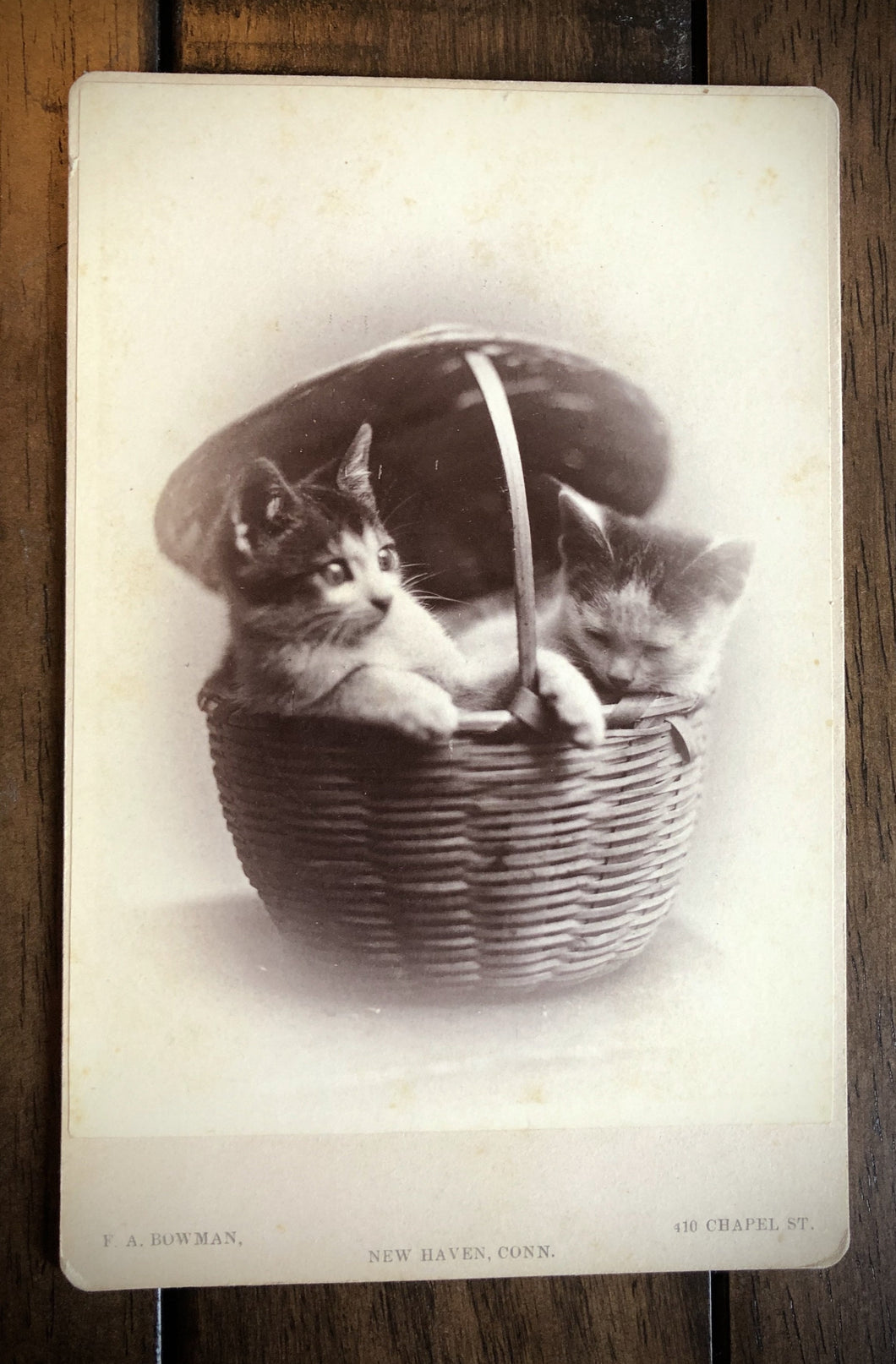 Two Kittens / Cats in a Basket 1870s 1880s Cabinet Card Photo