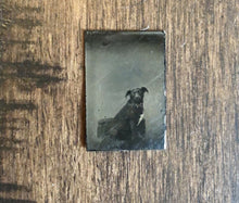 Load image into Gallery viewer, Miniature Gem Tintype Photo Cute Little Dog In Chair 1860s 1870s
