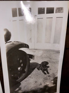 Lot Of Vintage Snapshots People Holding & Playing w Their Pet Dogs 1920s 1930s