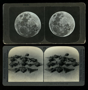 2 Antique 1800s Photos Bats & Full Moon Halloween Delight! Witch / Creepy Int