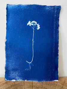 Toile De Chine Wild Indigo Flora A5 Cyanotype Print 17 of 20