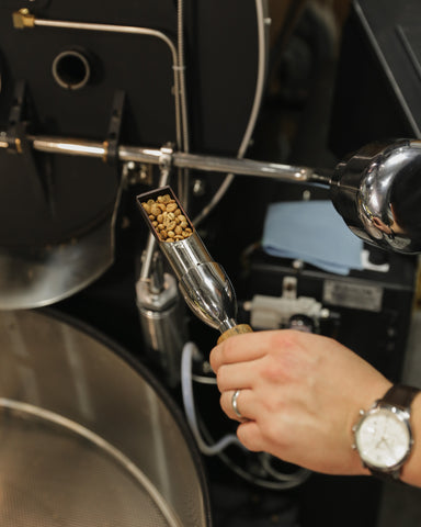 Checking coffee beans while roasting