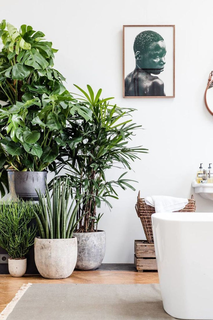 7 Ways to Incorporate Plants in Your Home