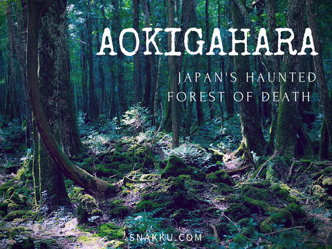 Aokigahara Most Haunted Place in Japan