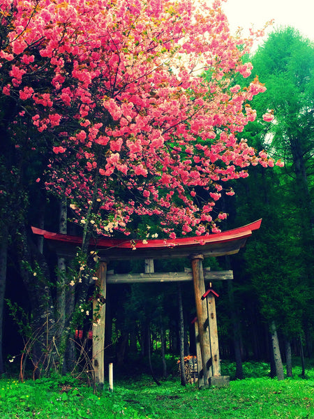 most beautiful places in japan snakku