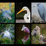 Wildlife Birds - Collection One