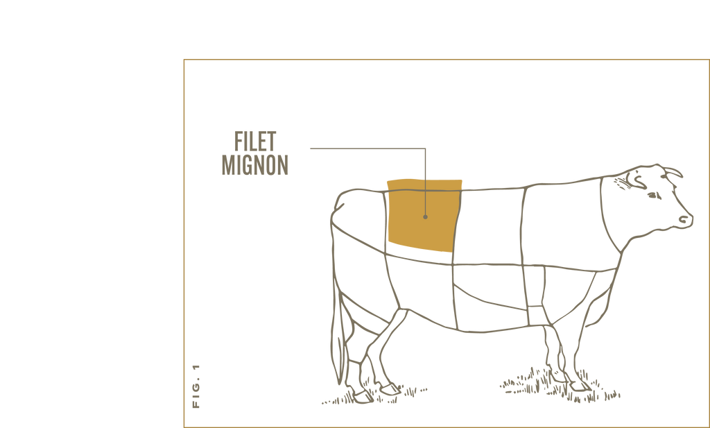 The filet mignon is cut from the tenderloin, which is part of the loin primal.