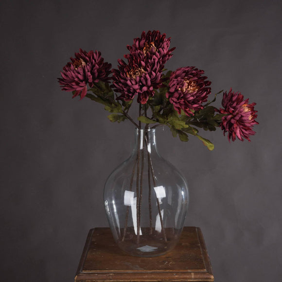 Autumn Spider Chrysanthemum | L J Home