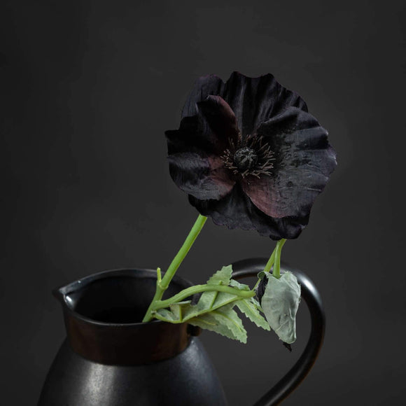 Black Wild Poppy | L J Home