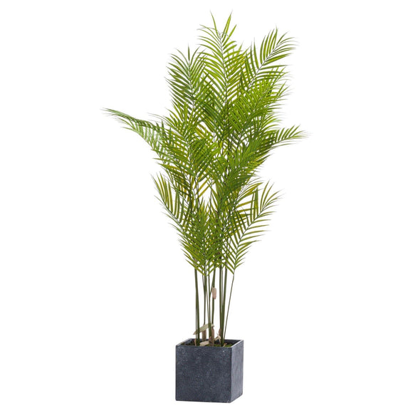 Large Paradise Potted Palm