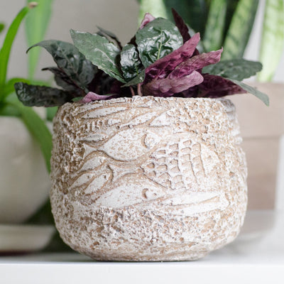 Fish Fossil Planter