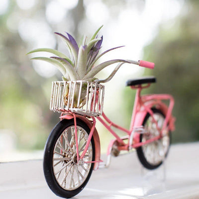 Beach Cruiser Bike with Air plants | Tillandsia, Indoor House Plants, Air Plant Holder, Bike Gift, Beach Gift, Air Purifying, Bromeliad