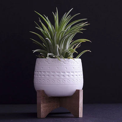 Mayan Planter - Ceramic with Wood Base | Perfect for Air Plants, Plant Pot, Legs/feet, Tillandsia, Air Plant, Indoor House Plant, Succulent