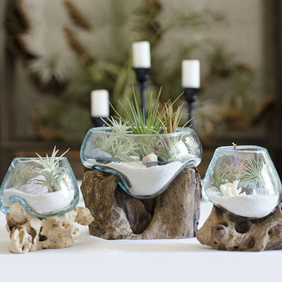 Root & Blown Glass Terrarium | Fish Bowl, Candle Holder, Serving Bowl, Driftwood