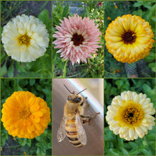 Load image into Gallery viewer, Calendula Seed Packet