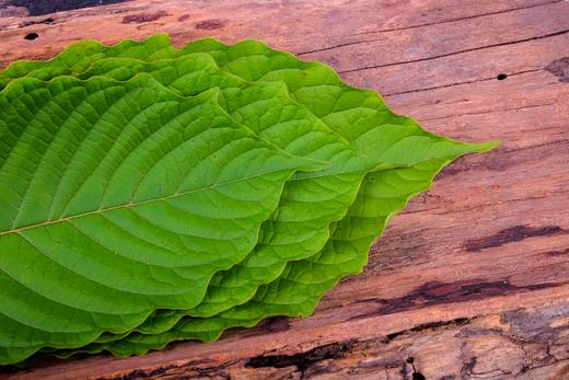 Everything You Need to Know About White Kratom