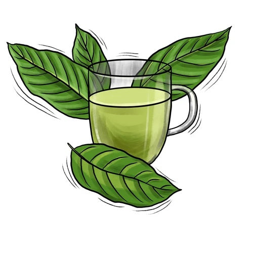 Kratom Tea and All Its Beneficial Properties