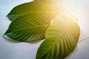 Maeng Da Kratom: Effects and Dosage