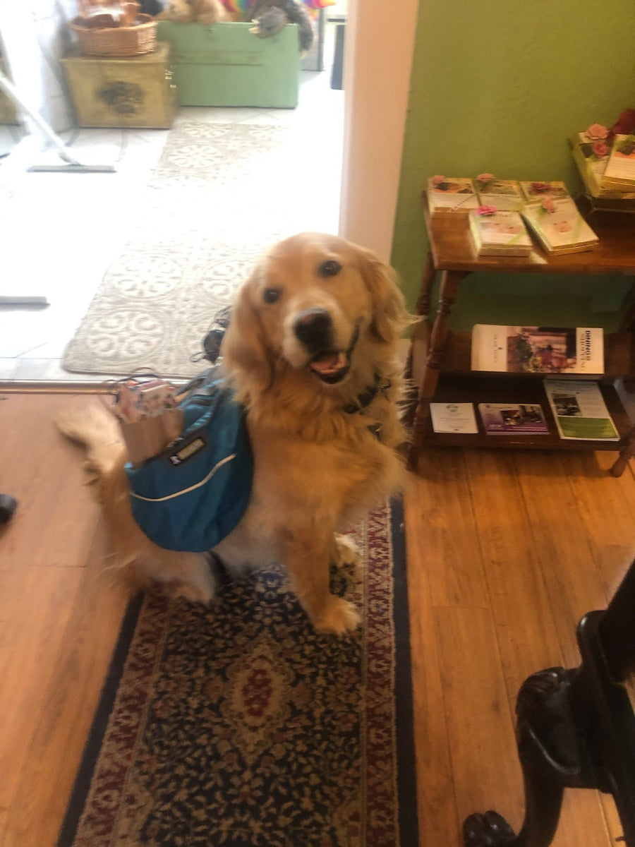 Levi our golden retriever delivering masks to seniors