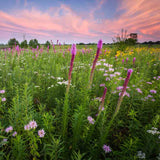 Wisconsin Wildflowers