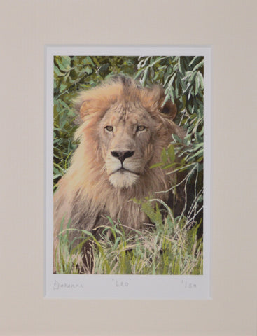 Leo - Limited Edition Prints