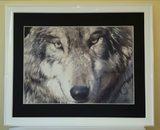 Grey wolf with a black mount and a gloss white frame
