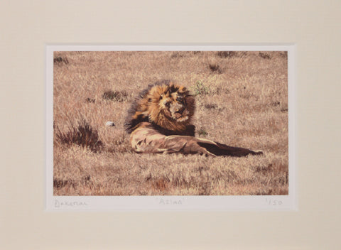 Aslan - Limited Edition Prints