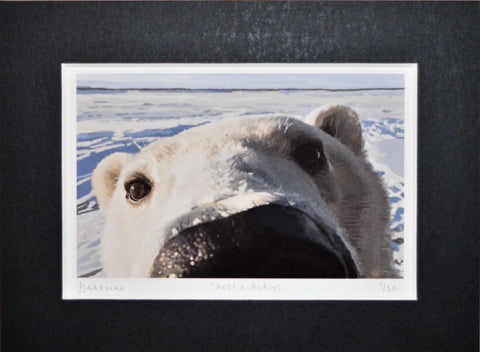 Arctic Antics - Limited Edition Print