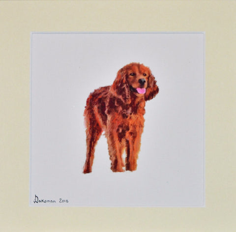 Setter - Limited Edition Print