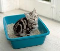 How long does it take to clean the cat litter?