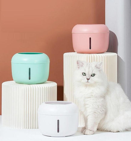 Cat Bowls & Feeders