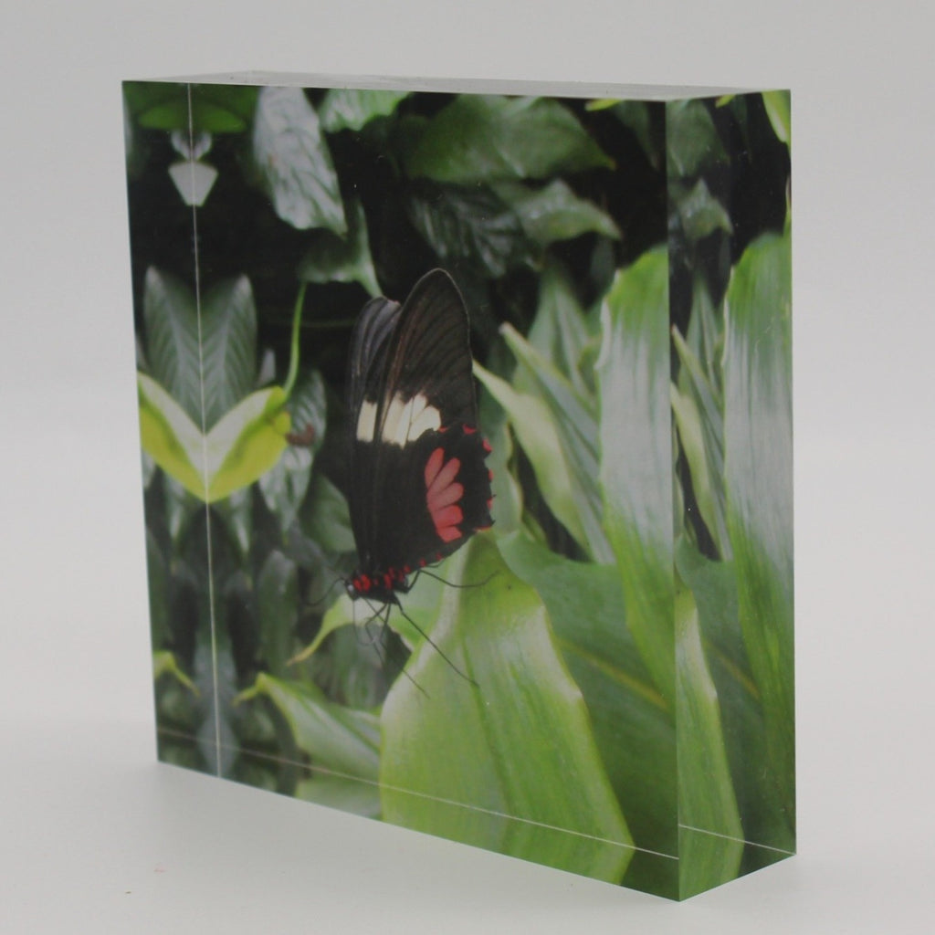 Tilted view of Acrylic block picture of black, red and white butterfly