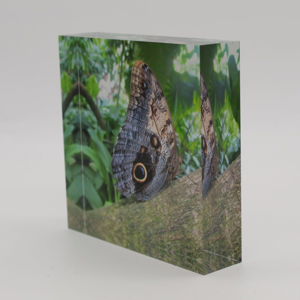 Tilted view of Acrylic block picture of moth butterfly on a tree limb