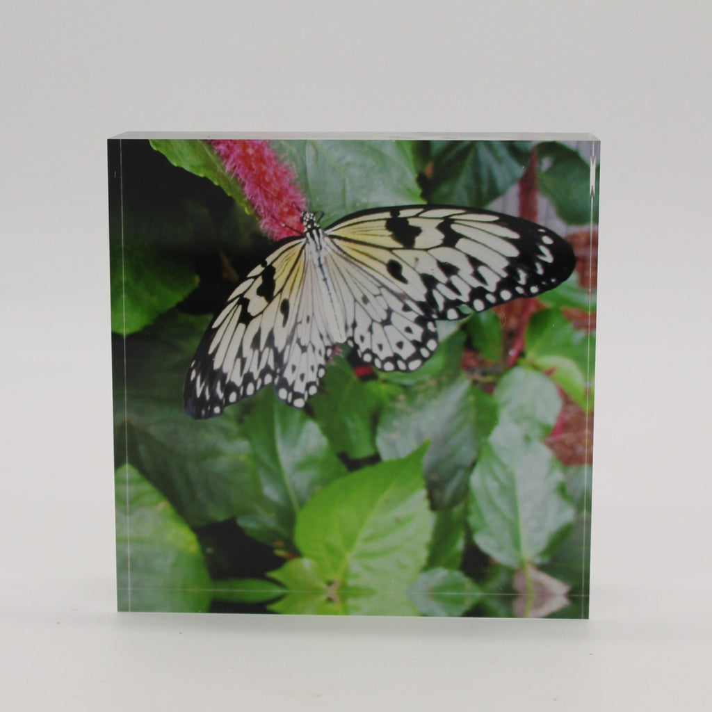 Acrylic block picture of black and white butterfly landing on pink flower and green leaves