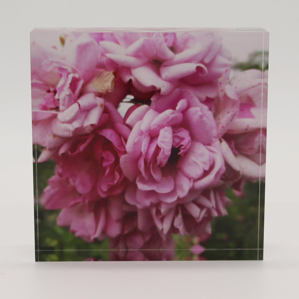 Acrylic block depicting close up view of blooming pink flowers