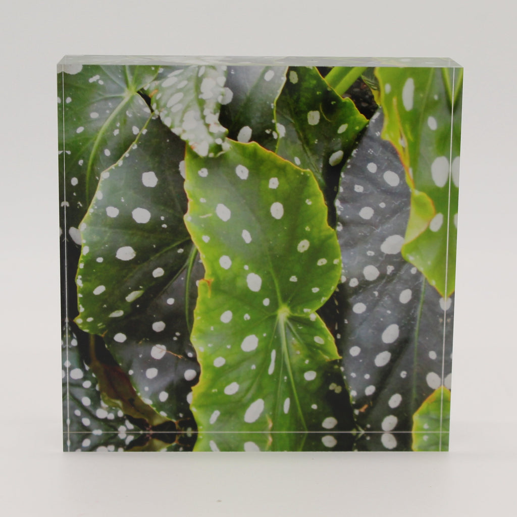 Acrylic block depicting water droplets on green leaves