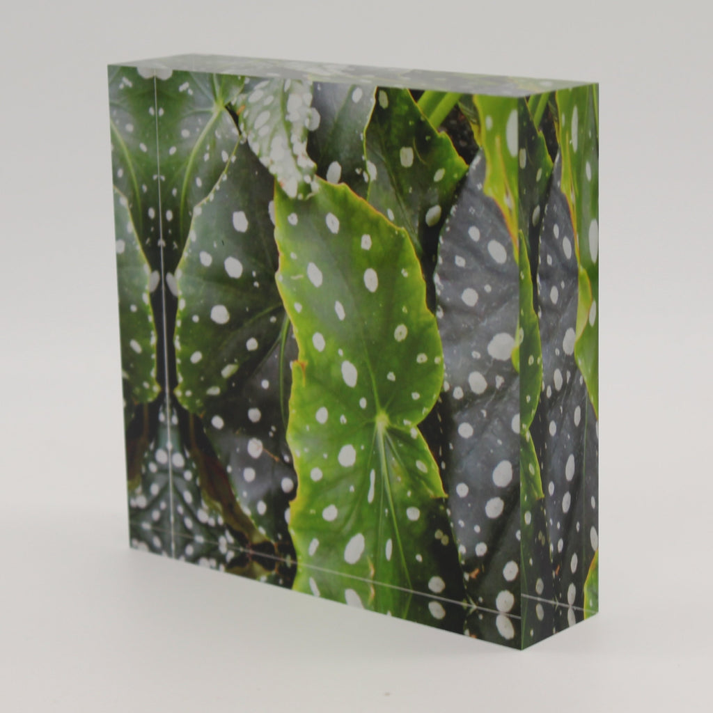 Tilted view of Acrylic block depicting water droplets on green leaves