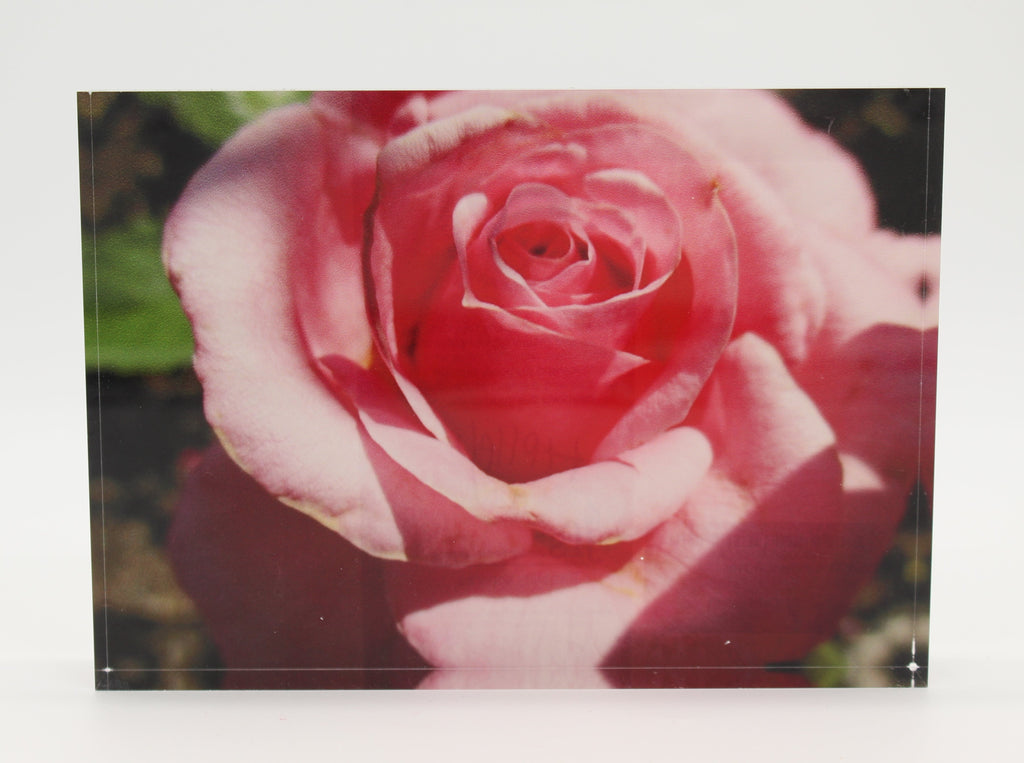 Acrylic block depicting close up view of pink flower