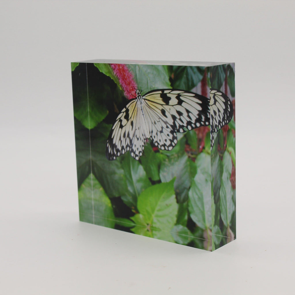 Tilted view of Acrylic block picture of black and white butterfly landing on pink flower and green leaves