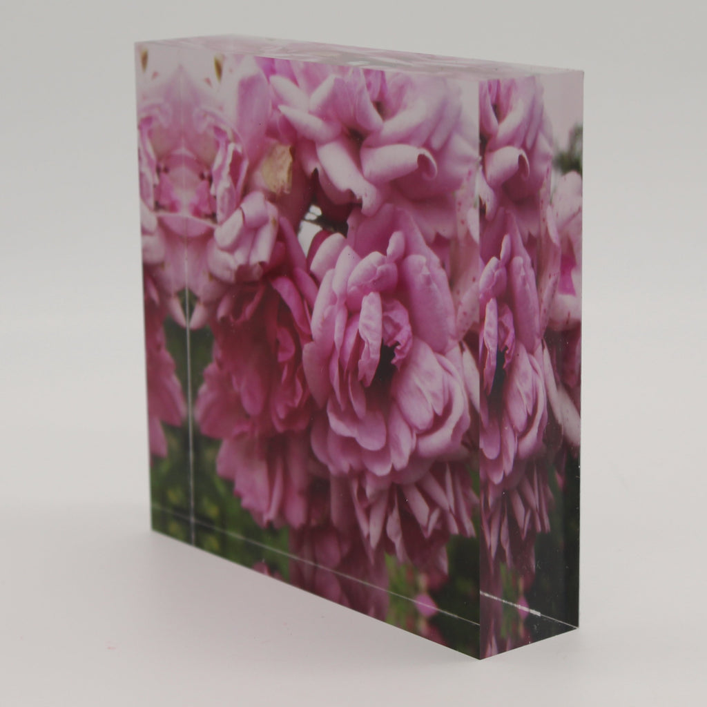 Tilted view of Acrylic block depicting close up view of blooming pink flowers