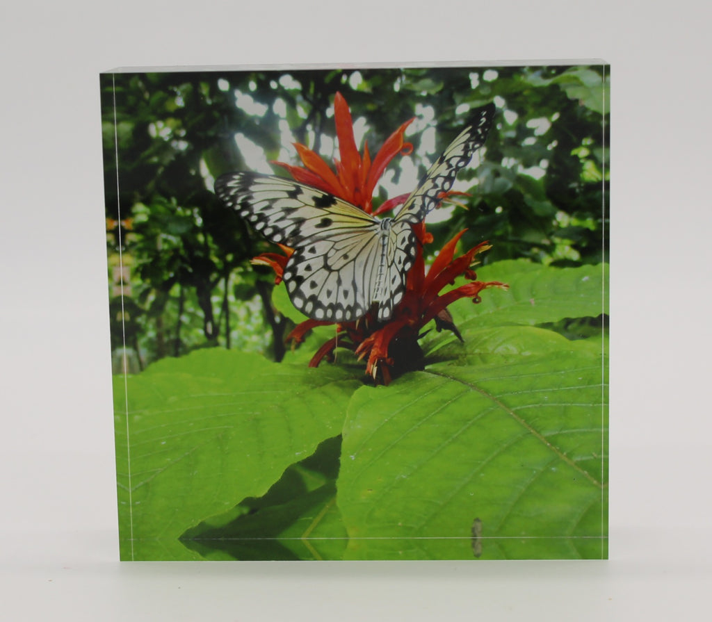 Acrylic block picture of black and white butterfly landing on a red flower